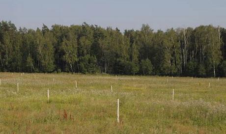 Виды и правила составления договора безвозмездного срочного пользования земельным участком