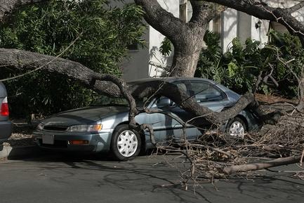 Дерево, упавшее на авто